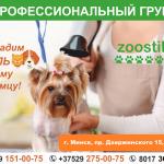 Стрижка собак и котов (профессиональный груминг). Минск.