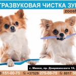 Ультразвуковая чистка зубов у собак. Без наркоза.