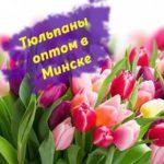 Тюльпаны оптом в Минске, любое количество!