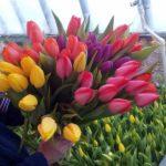 Тюльпаны в ассортименте оптом и в розницу.