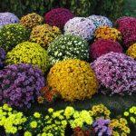 Цветы для сада и балкона