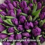 Тюльпаны свежие оптом к 8 марта.