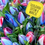 Ищешь поставщика на тюльпаны? Тебе сюда!