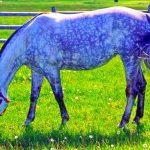 Куплю лошадей жеребят живым весом в Могилевской области