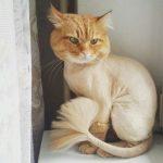 Профессиональные стрижки для собак и кошек