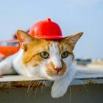 Ремонт и Отделка: выполним любые работы в Орше и районе