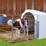 Индивидуальный домик для телят
