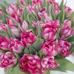 Цветы ,тюльпаны к 8 марта от производителя.более 25 сортов